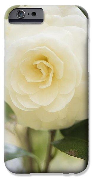 Camellia Japonica iPhone Case by Maria Mosolova