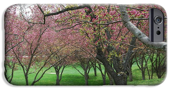 Cherry Blossoms iPhone Cases - Cherry Blossom iPhone Case by Trish Hale