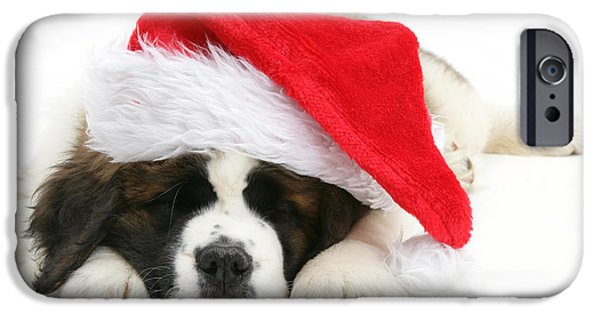 Puppies iPhone Cases - Christmas Puppy iPhone Case by Mark Taylor