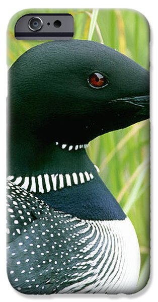 Common Loon, La Mauricie National Park iPhone Case by Philippe Henry