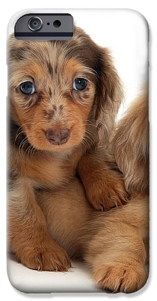 Dachshund Pups iPhone Case by Jane Burton