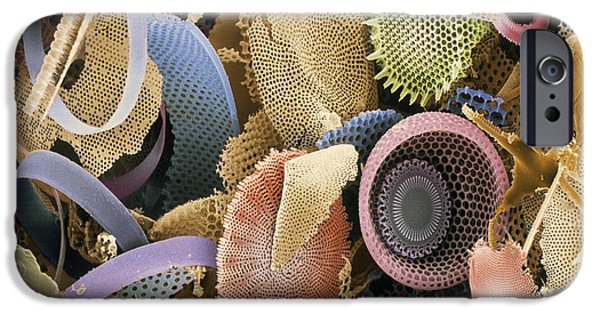 Frustule iPhone Cases - Fossilised Diatoms, Sem iPhone Case by Steve Gschmeissner