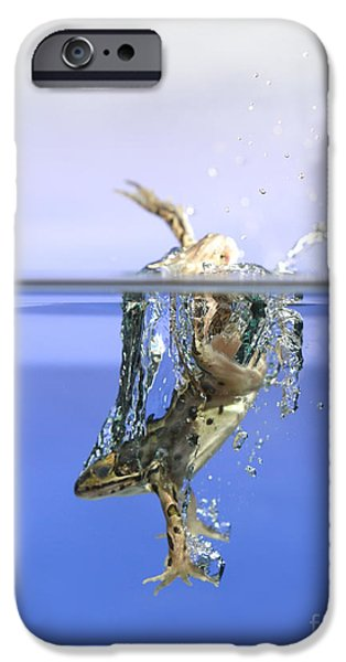 Anuran iPhone Cases - Frog Jumps Into Water iPhone Case by Ted Kinsman