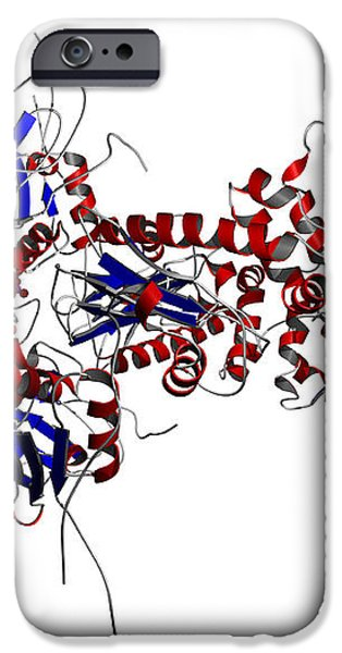 Heat Shock Protein 90 In A Larger iPhone Case by Ted Kinsman