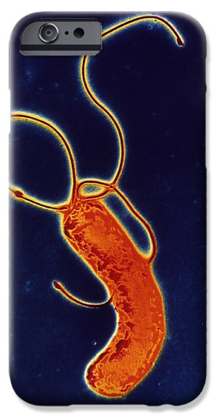 Helicobacter Pylori iPhone Cases - Helicobacter Pylori Bacteria iPhone Case by A.b. Dowsett