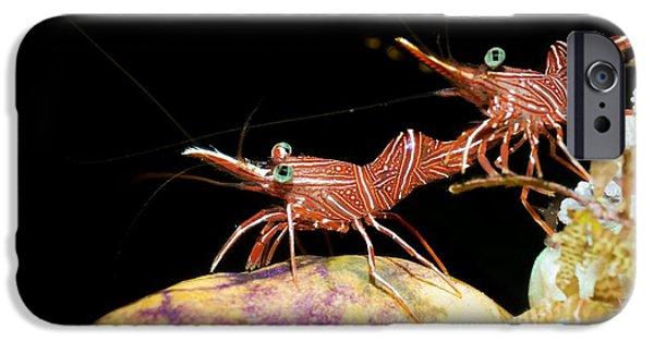Fauna iPhone Cases - Hingebeak Shrimp On A Seasquirt iPhone Case by Georgette Douwma