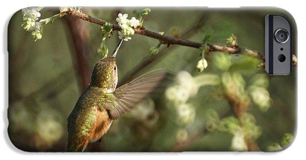 Feeding Birds iPhone Cases - Hummingbird iPhone Case by Ernie Echols