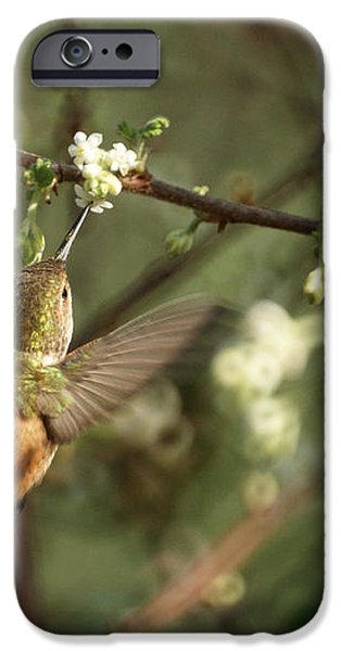 Hummingbird iPhone Case by Ernie Echols