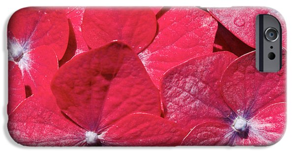 Redish iPhone Cases - Hydrangea closeup iPhone Case by Gaspar Avila