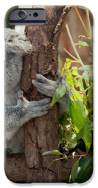 Koala iPhone Case by Carol Ailles
