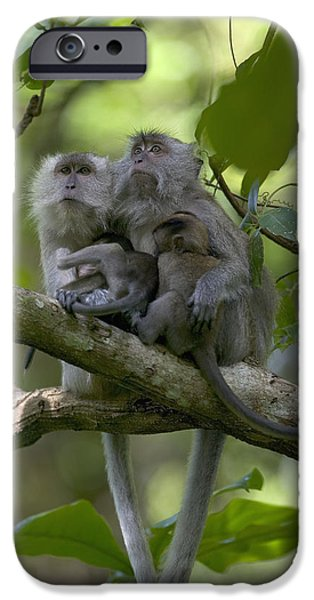 Long-tailed Macaque Macaca Fascicularis iPhone Case by Cyril Ruoso