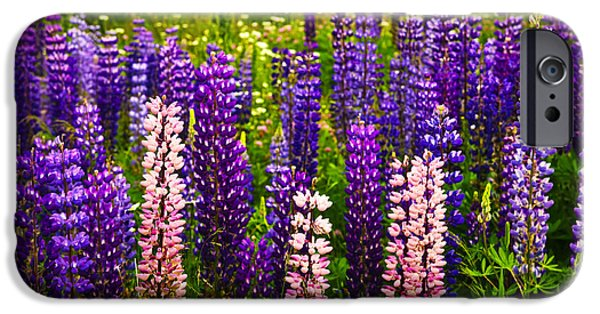 Flora iPhone Cases - Lupin flowers in Newfoundland iPhone Case by Elena Elisseeva