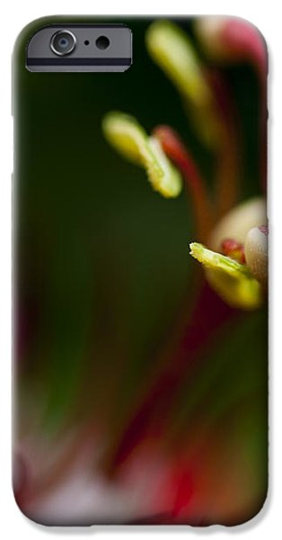 Passiflora flower iPhone Case by Zoe Ferrie