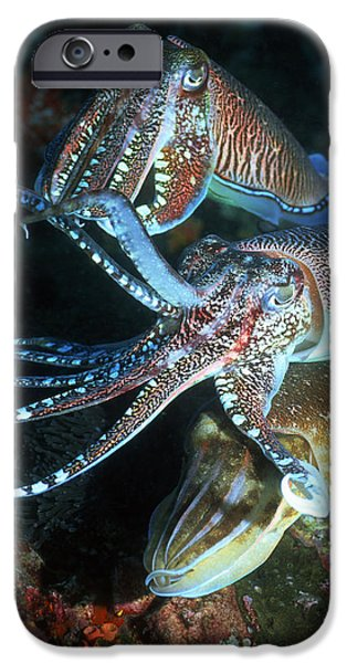 Aquatic Display iPhone Cases - Pharaoh Cuttlefish iPhone Case by Georgette Douwma
