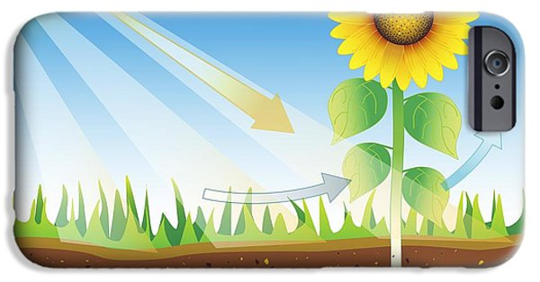 Energy Conversion iPhone Cases - Photosynthesis, Artwork iPhone Case by David Nicholls