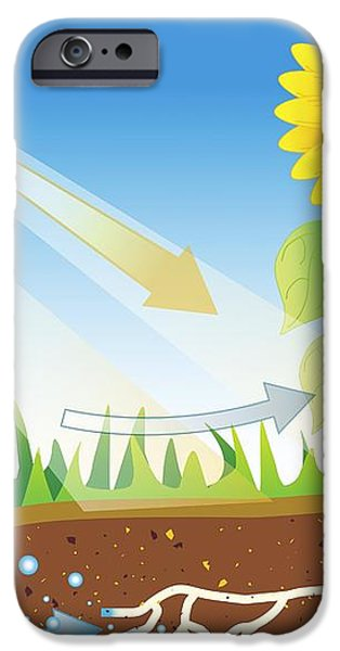 Photosynthesis, Artwork iPhone Case by David Nicholls