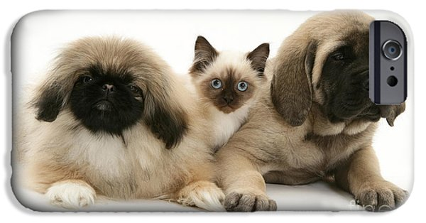 Pekingese iPhone Cases - Puppies And Kitten iPhone Case by Jane Burton
