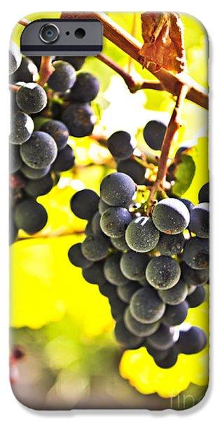 Cabernet Sauvignon iPhone Cases - Red grapes iPhone Case by Elena Elisseeva