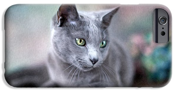 Housecat iPhone Cases - Russian Blue iPhone Case by Nailia Schwarz