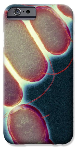 Salmonella, Tem iPhone Case by Henrik Chart, Centre For Infectionshealth Protection Agency