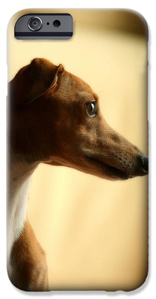 Rescued Greyhound iPhone Cases - Sami iPhone Case by Angela Rath