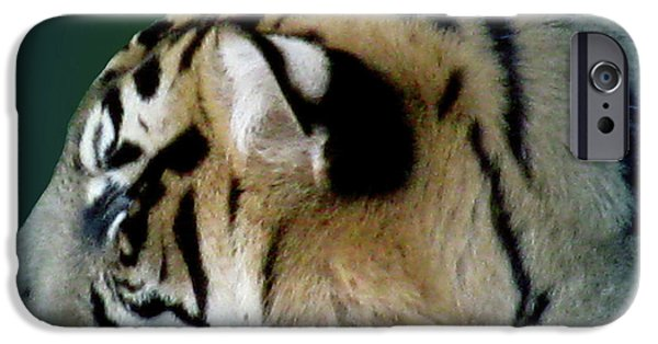 Animal Photograph Mixed Media iPhone Cases - Shades Of A Tiger  Series iPhone Case by Debra     Vatalaro