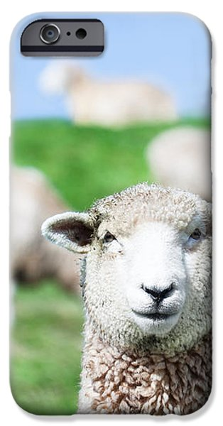 Sheeps iPhone Case by MotHaiBaPhoto Prints