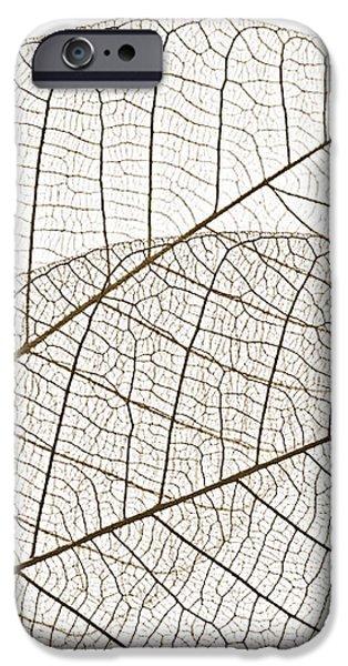Skeleton leaves iPhone Case by Elena Elisseeva