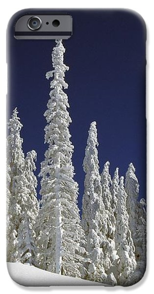 Snow-covered Pine Trees iPhone Case by Natural Selection Craig Tuttle