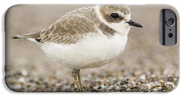 Recently Sold -  - Snowy iPhone Cases - Snowy Plover In Winter Plumage Point iPhone Case by Sebastian Kennerknecht