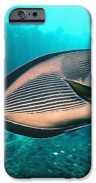 Sohal Surgeonfish iPhone Case by Georgette Douwma