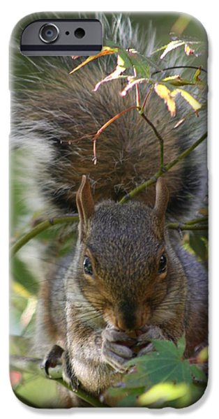Close Up Pyrography iPhone Cases - Squirrel Dinner iPhone Case by Valia Bradshaw
