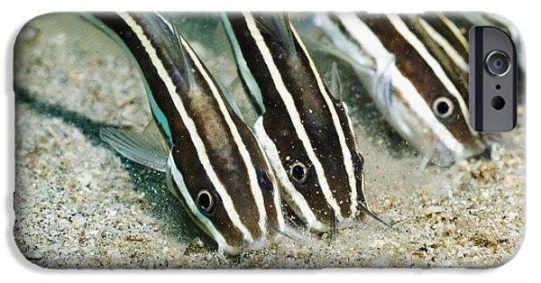 Fauna iPhone Cases - Striped Catfish iPhone Case by Georgette Douwma
