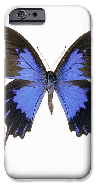Blue Swallowtail iPhone Cases - Swallowtail Butterfly iPhone Case by Lawrence Lawry