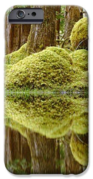 Swamp iPhone Case by David Nunuk