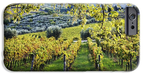 Chianti Hills iPhone Cases - Vineyards and Olive Groves iPhone Case by Jeremy Woodhouse