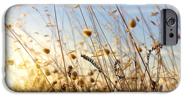 Crops Photographs iPhone Cases - Wild Spikes iPhone Case by Carlos Caetano