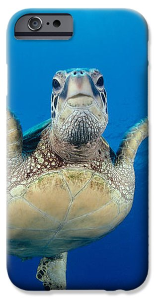 Green Sea Turtle iPhone Case by Dave Fleetham - Printscapes