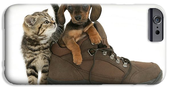 Housecat iPhone Cases - Kitten And Puppy iPhone Case by Jane Burton