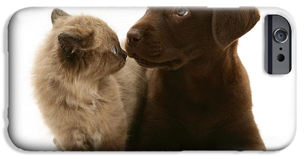 Chocolate Lab iPhone Cases - Kitten And Puppy iPhone Case by Jane Burton