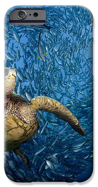 Green Sea Turtle iPhone Case by Dave Fleetham