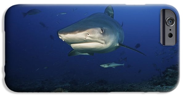 The Tiger iPhone Cases - A Large 10 Foot Tiger Shark Swims iPhone Case by Terry Moore