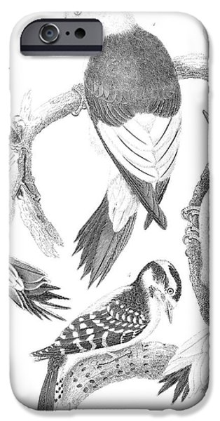 Hairy Woodpecker iPhone Cases - American Ornithology iPhone Case by Granger