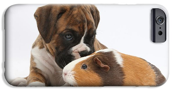 Boxer iPhone Cases - Boxer Puppy And Guinea Pig iPhone Case by Mark Taylor