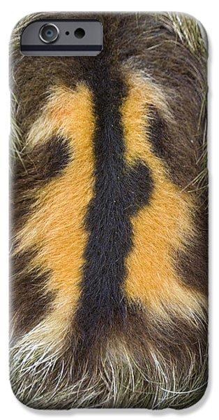 Brown-throated Three-toed Sloth iPhone Case by Suzi Eszterhas