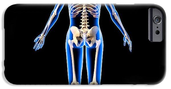 Dexterity iPhone Cases - Female Skeleton, Artwork iPhone Case by Roger Harris