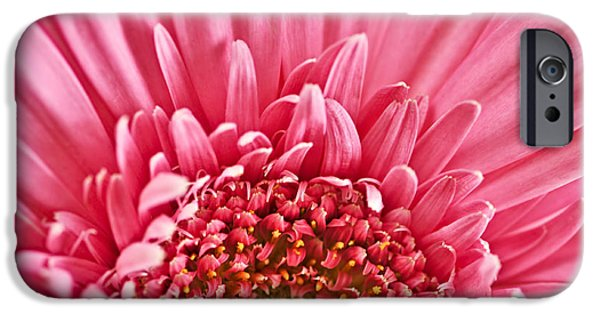 Vibrant Colors iPhone Cases - Gerbera flower iPhone Case by Elena Elisseeva