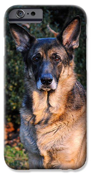 German Shepherd iPhone Case by Jai Johnson
