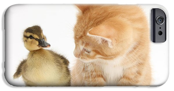 Baby Bird iPhone Cases - Ginger Kitten And Mallard Duckling iPhone Case by Mark Taylor