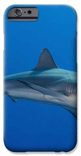 Gray Reef Shark, Kimbe Bay, Papua New iPhone Case by Steve Jones